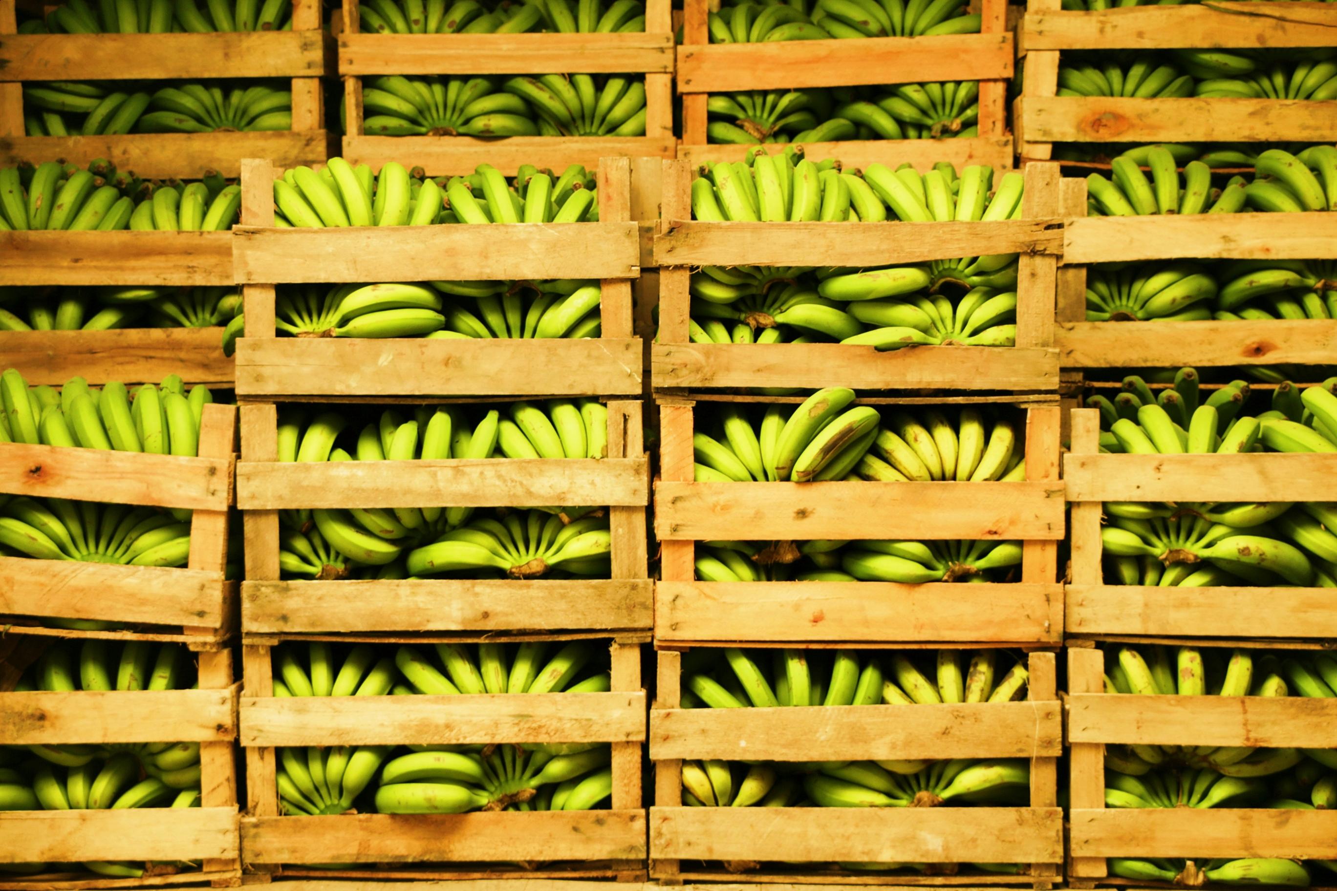 bananas em caixas
